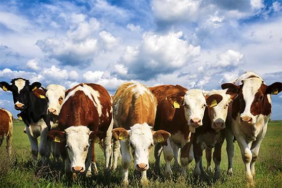 Farm Combined